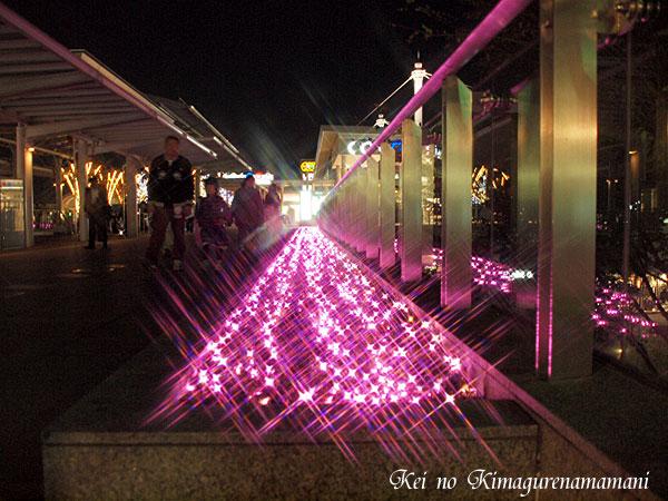 ピンクの絨毯♪