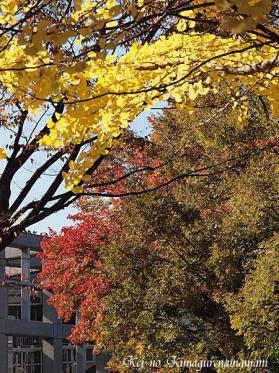 色とりどりの木々♪