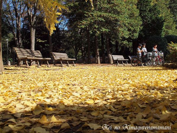 黄色の絨毯♪