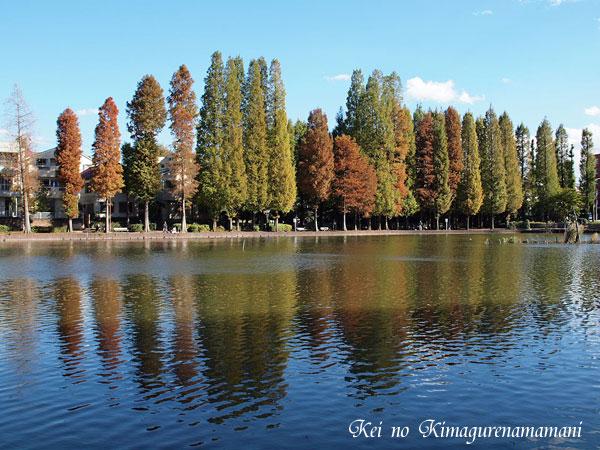水面に映る木々♪