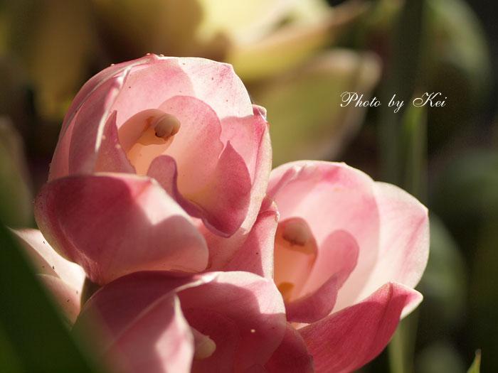 温室の蘭♪