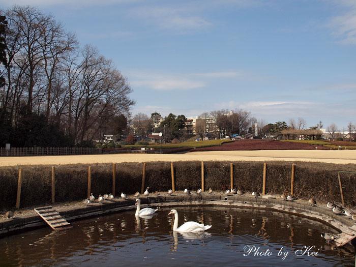 Gセンター内・白鳥の池♪