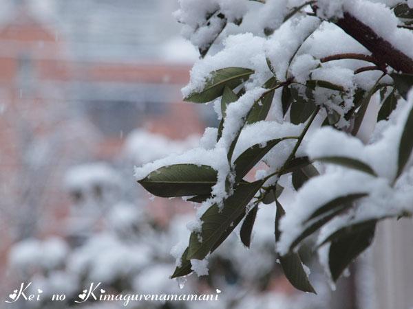 9回目の雪♪