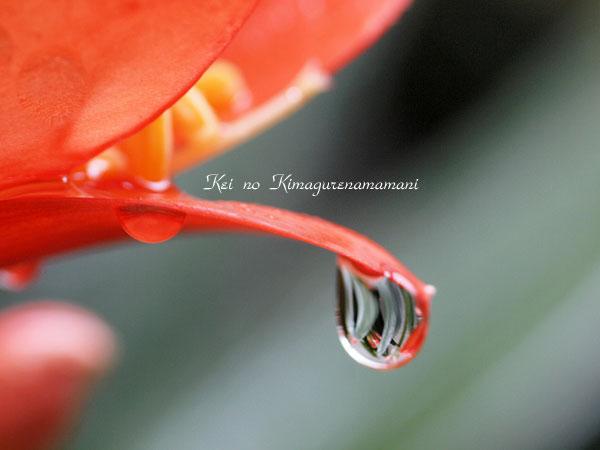 雨の日のクンシラン♪