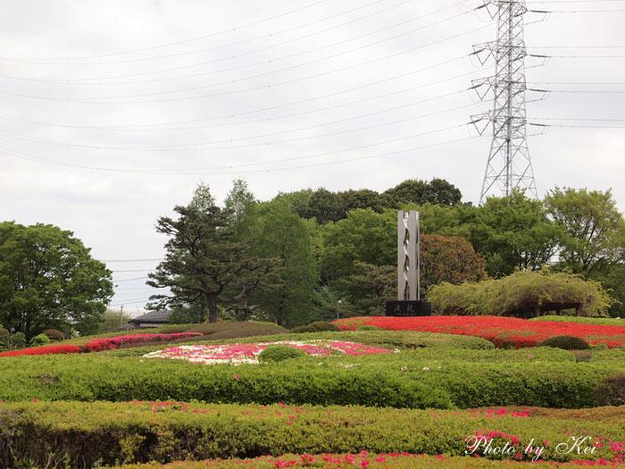 ツツジ山♪