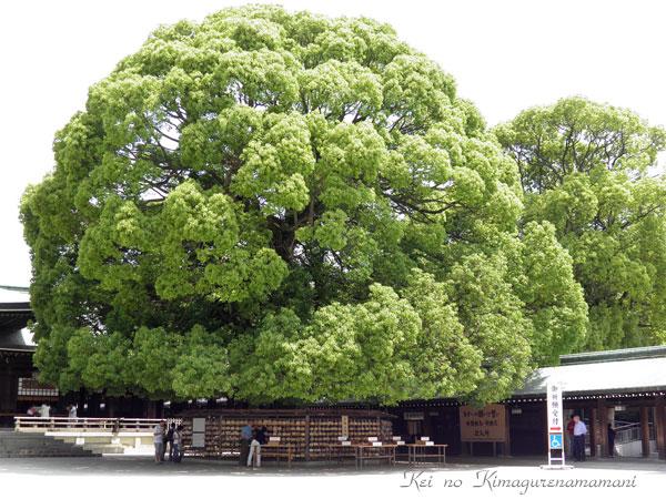 巨木の下は♪