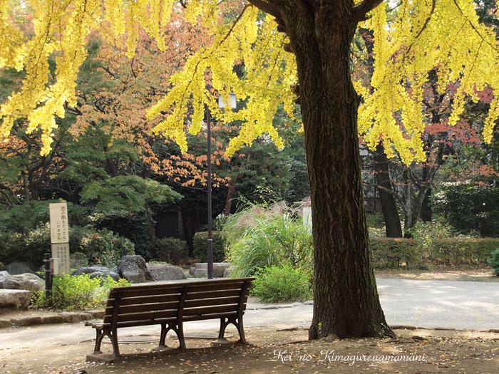 イチョウの木とベンチ♪