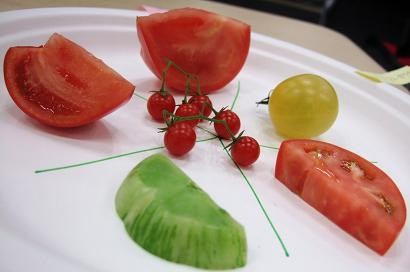 aトマト試食