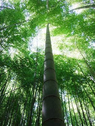 a竹林歩き4