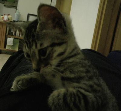 Kitten 017 trimmed [1600x1200]