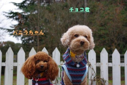 チョコ君&バニラちゃん