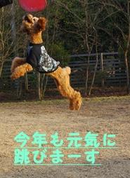 飛びま~す