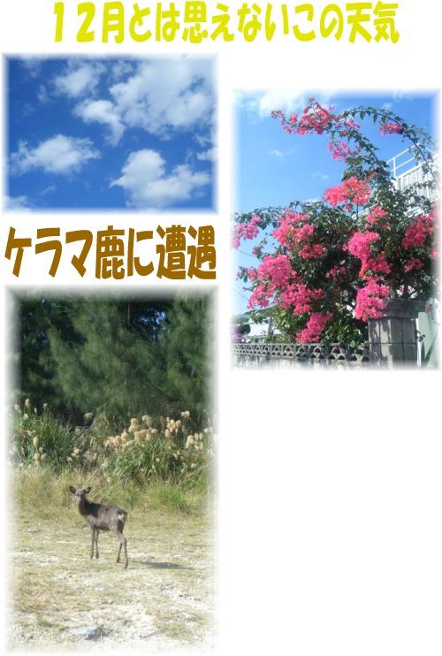青空とケラマ鹿