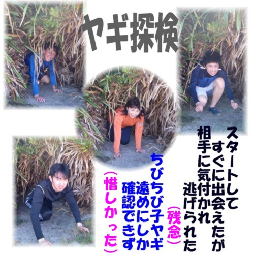 やぎ探検OK!