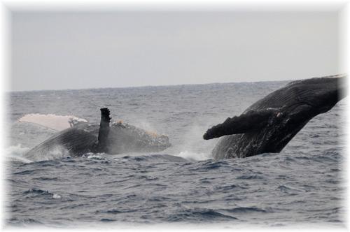 2-15 PM クジラ