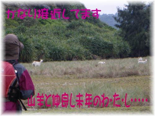 山羊と未年