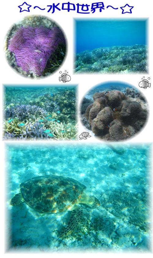 ①水中世界
