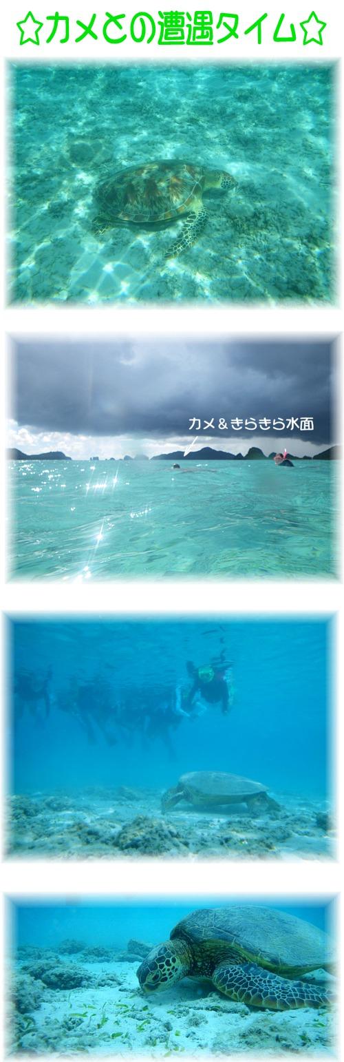 ⑤カメとの遭遇