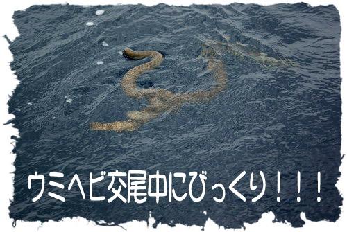ウミヘビ交尾中