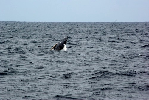 子クジラ ブリーチ