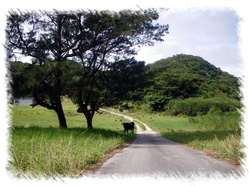 ④島内観光