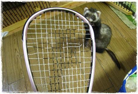 racket1.jpg