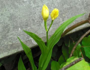 2011-6-9huei2-1.jpg