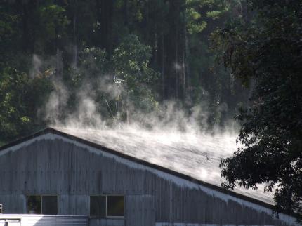 屋根の湯気