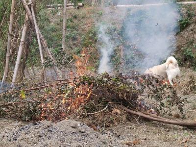 焚き火と犬