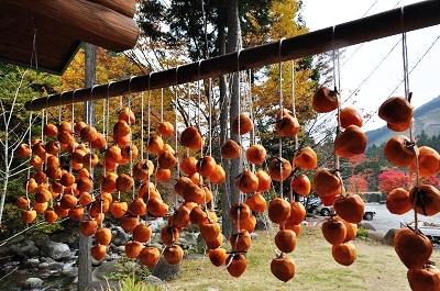 干し柿!とりあえず100個吊るした!