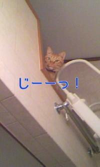 繝ュ繝輔ヨ_convert_20090331224549