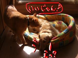 snap_kiki321_2009102223443.jpg