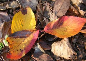 虫食い落ち葉