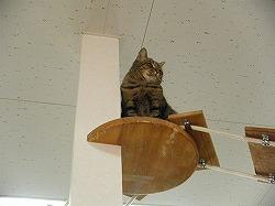 天井からニャー