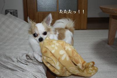 IMG_3426・2 コピー
