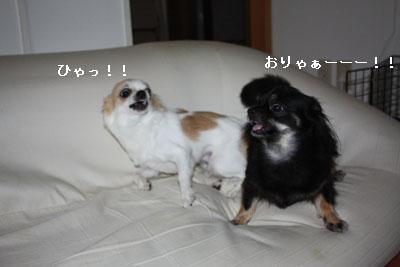 IMG_3405・2 コピー