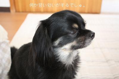 IMG_3681・2 コピー