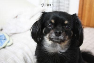 IMG_3730・2 コピー