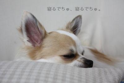 IMG_3732・2 コピー