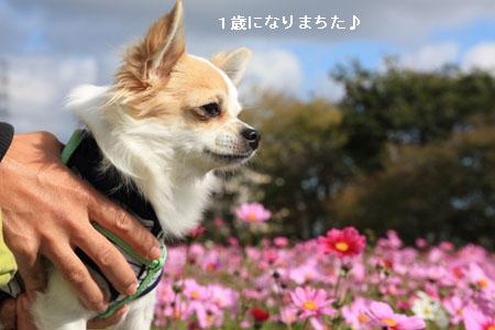 IMG_4071・2 コピー