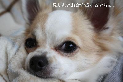 IMG_4494・2 コピー