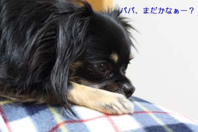 IMG_6089・2 コピー
