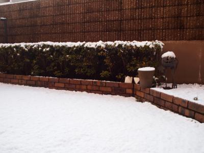 二度目の積雪。