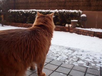 雪見きらら。