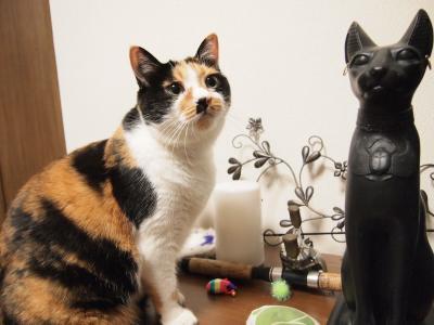 古代エジプト猫と・・・