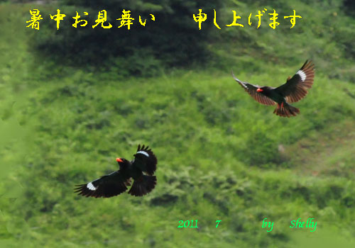 DSC_1957L暑中-_edited-2