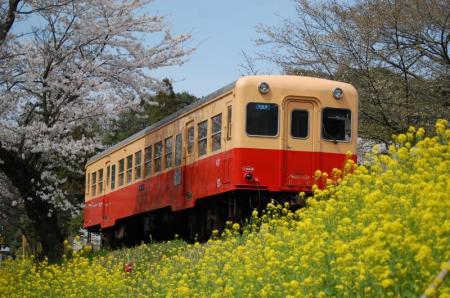 小湊鐵道 飯給駅 2008-4-5