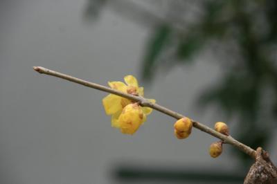 2010-01-13_00.jpg