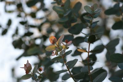 2010-01-17_31.jpg