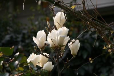 2010-03-22_46.jpg